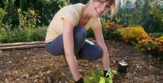 дачники и садоводы