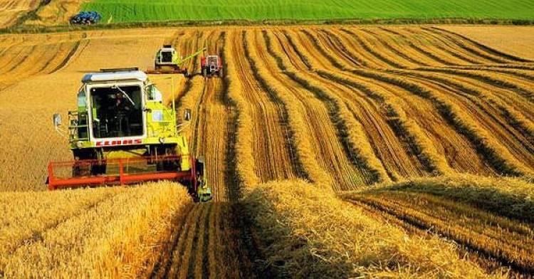 Единый сельскохозяйственный налог (ЕСХН)
