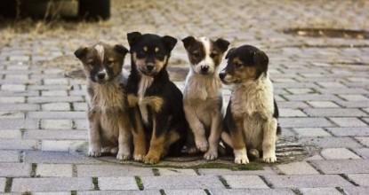 Всемирный день бездомных животных