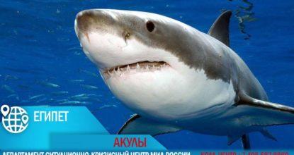 акулы хургада