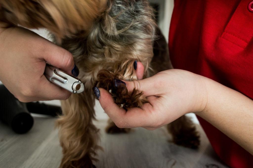Стрижка когтей у собаки: все, что нужно знать