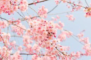 Доставка композиций цветов